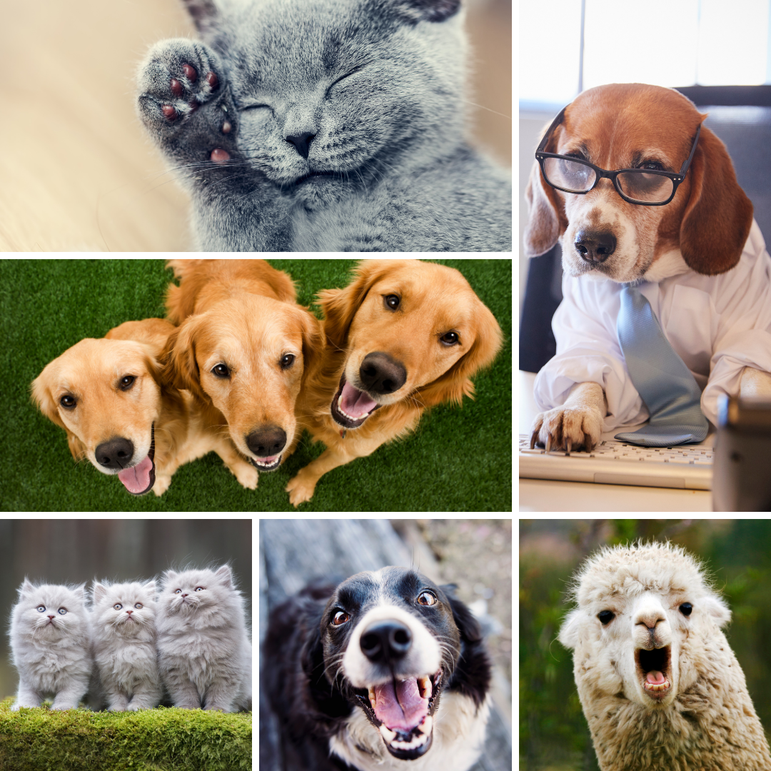 Improve your search rank by stuffing your site with pet photos - Happy April Fools